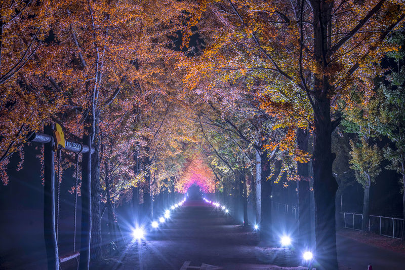 Illuminated trees in park during autumn