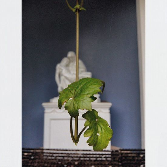 Daun Pieta Jesus BundaMaria Daun Leaves MotherMarry Christianity Catholicism