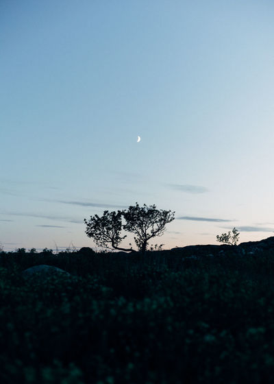 Nature Beauty In Nature Dusk Landscape Lonely Tree Minimal Minimalism Moon Moonlight Night No People Outdoors Silhouette Simple Simplicity Sky Tranquil Scene Tranquility Tree
