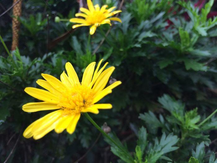 Yellow beauty Flower Flowering Plant Yellow Plant Vulnerability  Fragility Freshness