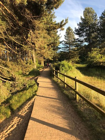 Coastal path Coastal Path Tree Plant The Way Forward Direction Footpath Nature Sunlight Growth Beauty In Nature Tranquility Incidental People Diminishing Perspective Shadow Day Land Sky