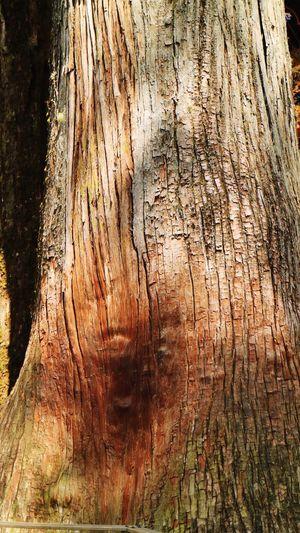 三峯神社 秩父 神木 パワースポット Sacred Tree Power Spot EyeEm Nature Lover
