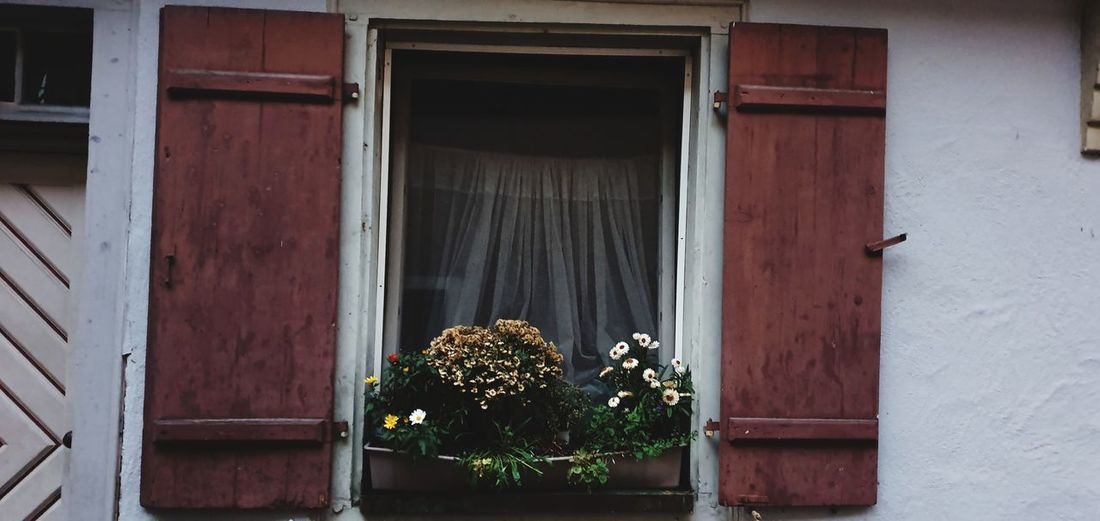 Flower pots on window of building