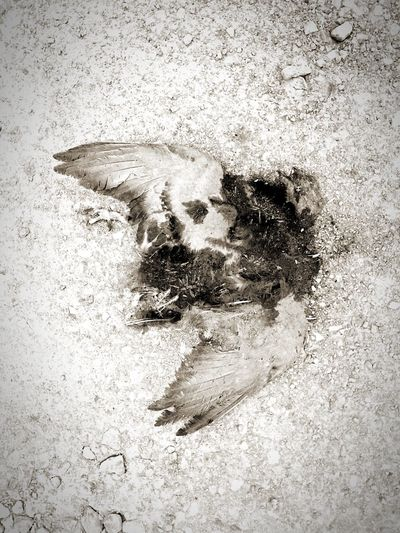 Bird die on the street Grunge Black And White Wildlife Bird Die Street Bird Abstract Textured  Sand Backgrounds No People Full Frame Day Outdoors Close-up Nature