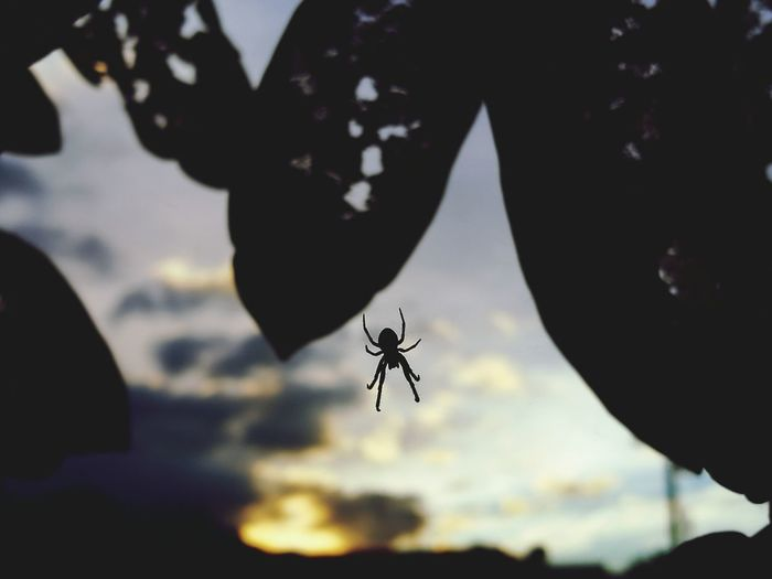 HuaweiP9 One Animal Animal Themes Spider Animal Wildlife Animals In The Wild Outdoors No People Close-up Nature Sky