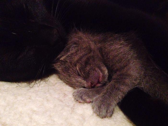 Cats Motherlove