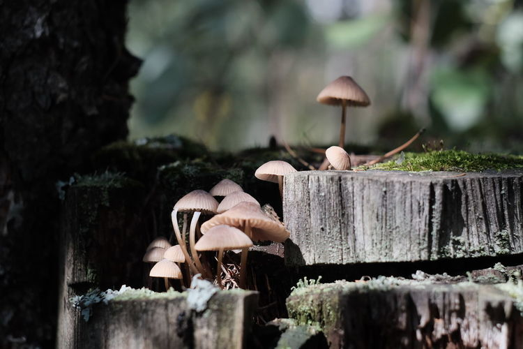 Close-up of mushrooms on wood in forest