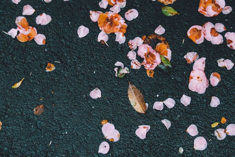 High Angle View Of Petals On Road