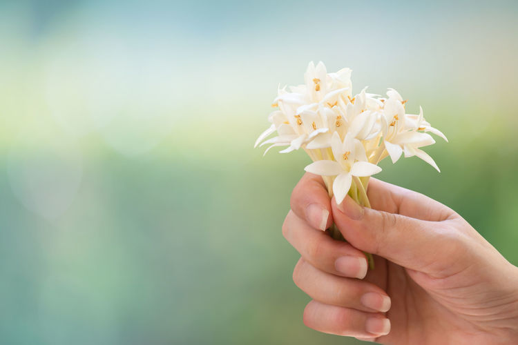 Close-up of cropped hand holding white flowers