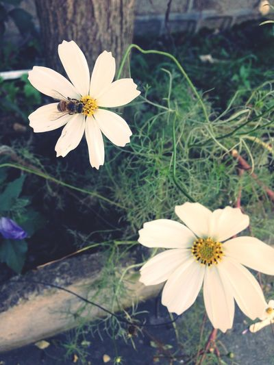Eye4photography  EyeEm Flower Flowers, Nature And Beauty White Flowers Bee 🐝 A Trip To Iran Last Days Of Summer