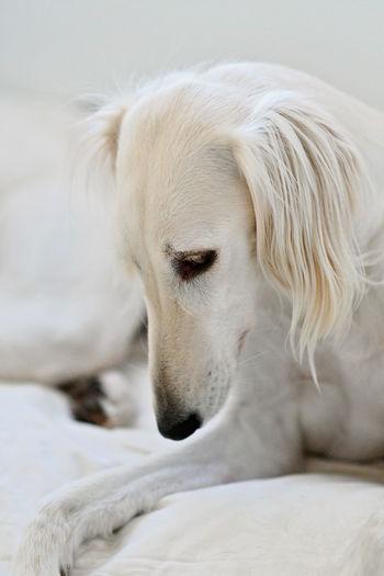 Close-up of a dog