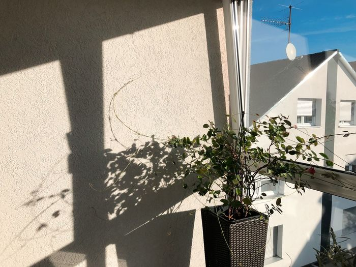 Shadow of potted plant on wall of building