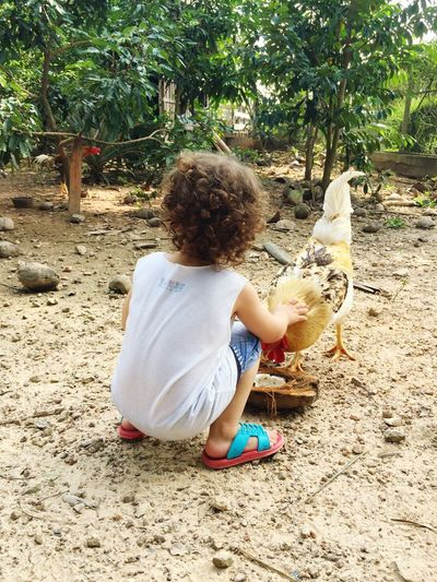 Rear View Of Little Boy Feeding Rooster At Farm