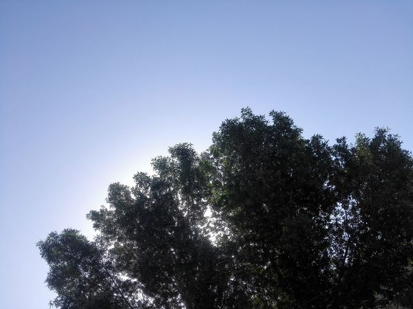 Tree Nature Silhouette Sky No People Beauty In Nature Day Outdoors Close-up Architecture Ahvazinmyeyes Ahwazpictures Ahvaz Iran Ahvaz Ahwaz Ahwazi Tree تهرانگردی تهران Sunset Sun Nature Tehran, Iran Tochal Picture نور هست ، اما من سایه تو را ،ترجیح میدهم