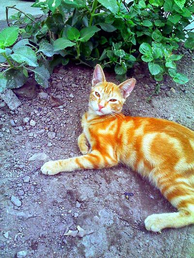 My Cute Cats Pet Photography