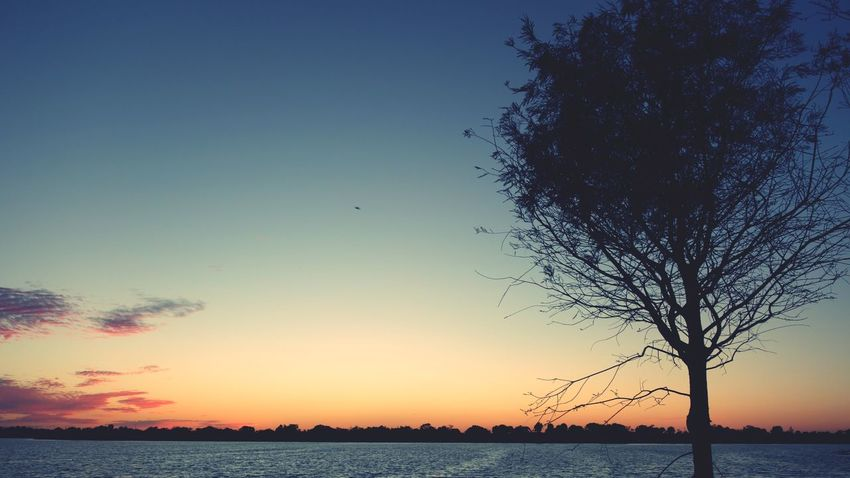 Tree By The Lake Water Sunset Sea Beauty In Nature Nature Silhouette Sky Scenics Tranquil Scene Horizon Over Water No People Tranquility Clear Sky Tree Outdoors Day