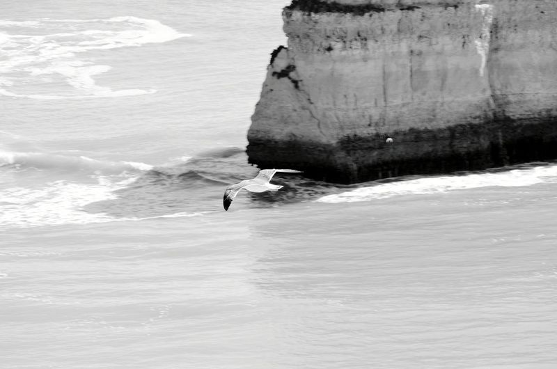Oldies Beachphotography Nature Travel Beach Photooftheday Portugal Seagulls And Sea Seagull Praia Da Marinha Birds Waves Water Sea Full Length Sport Wave Extreme Sports