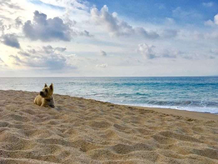 Scenic View Of A Dog On Beach Against Sky