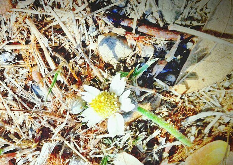 Lil flower that lost then get found 🌻 First Eyeem Photo