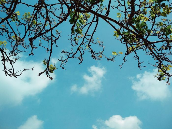 Nature Sky Tree Beauty In Nature Low Angle View Day Branch Flower Outdoors No People Cloud - Sky Blue Fragility Freshness