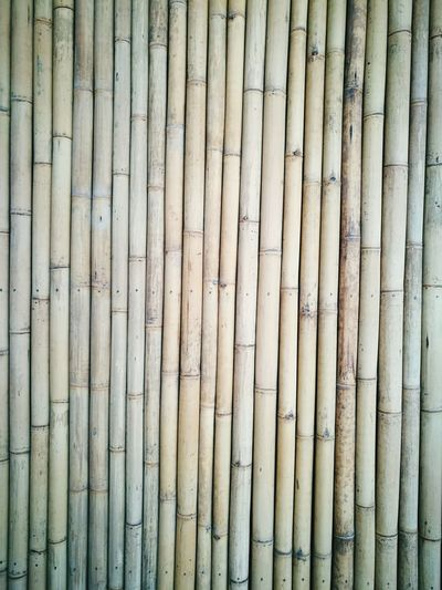 Bamboo Bamboowall Bamboofence Backgrounds Full Frame Textured  Pattern Wood - Material Repetition Close-up