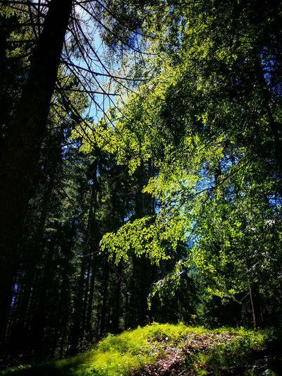 Malga Pusterle Asiago Highland Vicenza Italy Travel Photography Travel Voyage Traveling Mobile Photography Fine Art Photography Walking In The Woods Stunning Light And Shadows Showcase July