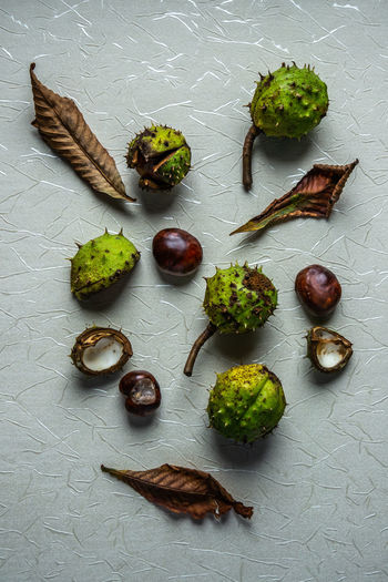 Autumn chestnut