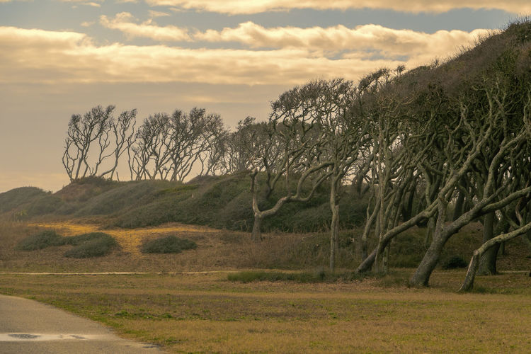 Leaning Wayward Wayward Trees Tranquil Scene Beauty In Nature Sky Scenics - Nature Environment Sunset Non-urban Scene No People Grass Outdoors Road My Best Photo