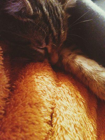 Relaxing Taking Photos Kitten Egyption Mau Enjoying Life Cat