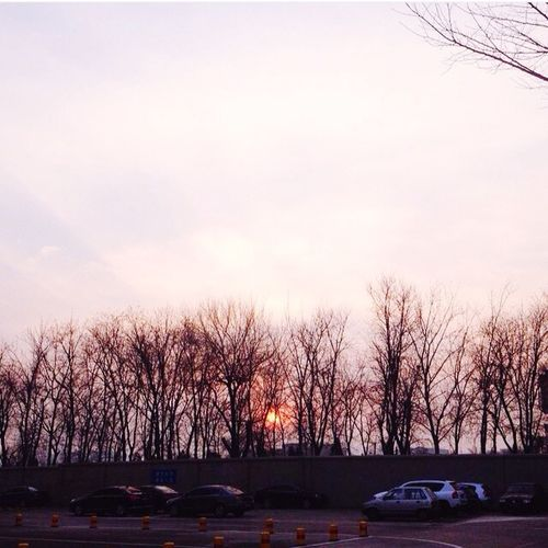 Cars on bare trees against sky during sunset