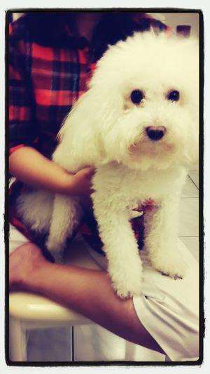 QQ Dog