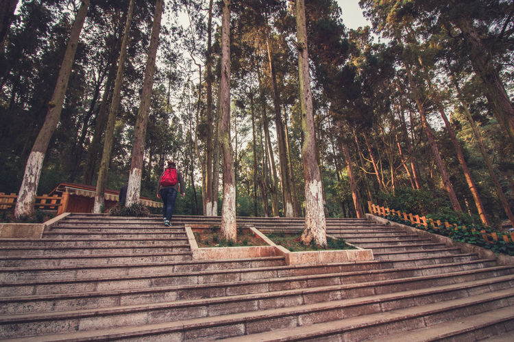 Architecture Casual Clothing Day Forest Full Length Growth Land Leisure Activity Nature One Person Outdoors Plant Real People Rear View Staircase Standing Steps And Staircases Tree Trunk Wood - Material WoodLand