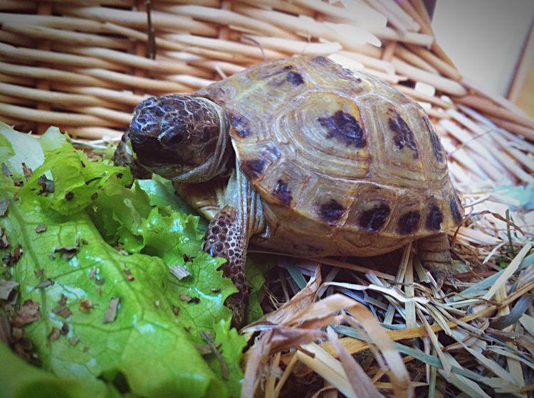 черепаха Turtle Dinosaur Pets Cute Taking Photos Hello World Check This Out Russia Enjoying Life