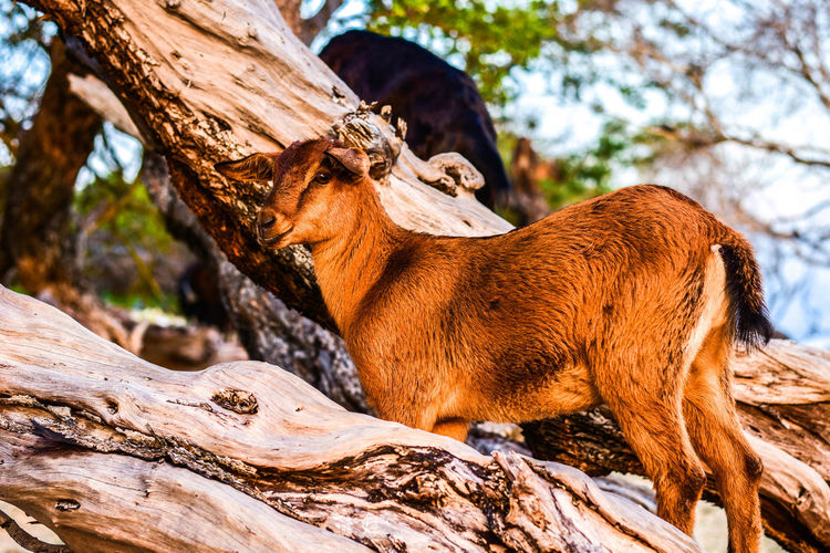 More beautiful of Lombok Animal Animal Themes Animal Wildlife Animals In The Wild Branch Brown Day Focus On Foreground Low Angle View Mammal Nature No People One Animal Outdoors Plant Relaxation Tree Tree Trunk Trunk Vertebrate