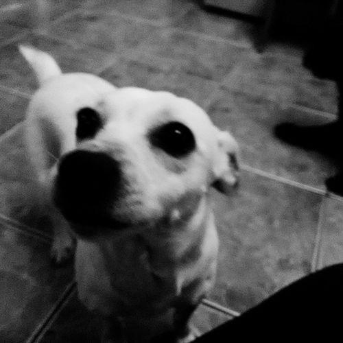 Blanca Dogs OnAnOrdinaryAfternoon Cellphonephotography Motog2