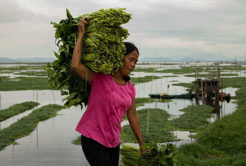 Kangkong Farmer at Lakeshore Laguna de Bay, Taguig City. September 19, 2016. Photo: Olga Mihova Documentary Everydayphilippines Farming Philippines Photojournalism Street Photography Streetphotography Travel