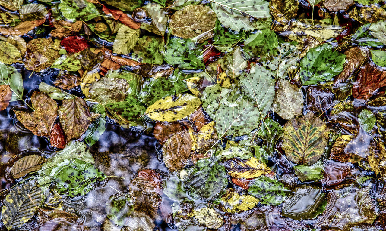 leaf, autumn, backgrounds, high angle view, full frame, nature, no people, change, textured, close-up, outdoors, day, fragility, beauty in nature, water