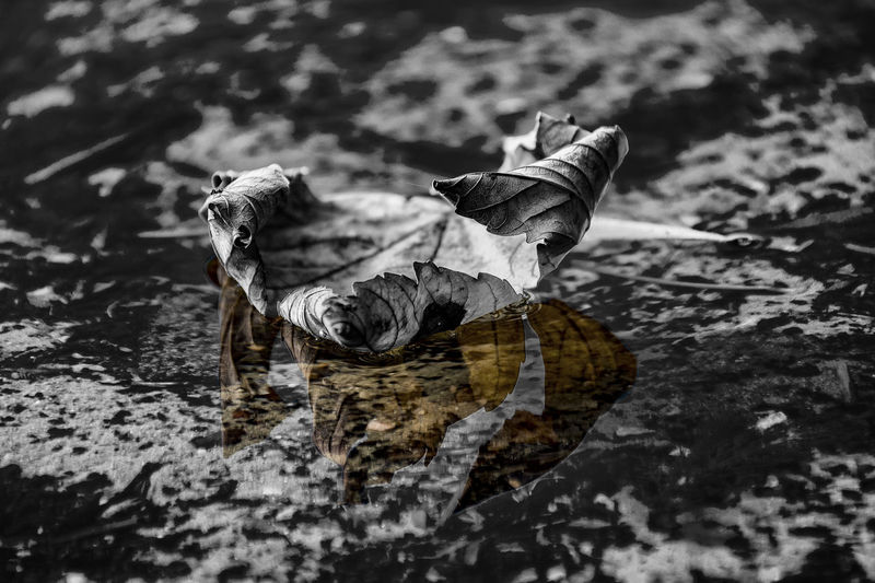Beauty In Nature Black And White Close-up Cold Temperature Day Leaf Nature No People One Animal Outdoors Reflection Segeberger See Water Water Reflections