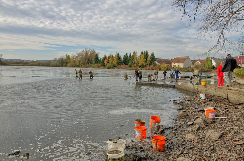 Fishing 2018 Buckets FisherMens MuddyWater Beauty In Nature Day Fishermen's Life Lake Large Group Of People Lifestyles Muddy Nature Outdoors People Real People Sky Tree Water