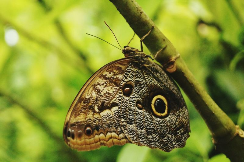 Close-up of butterfly on stem