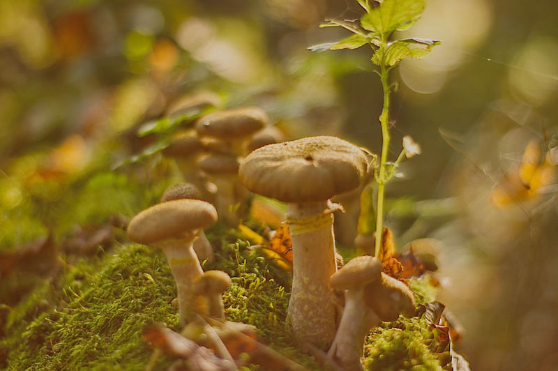Beauty In Nature Close-up Day Freshness Fungus Mushroom Nature No People Outdoors