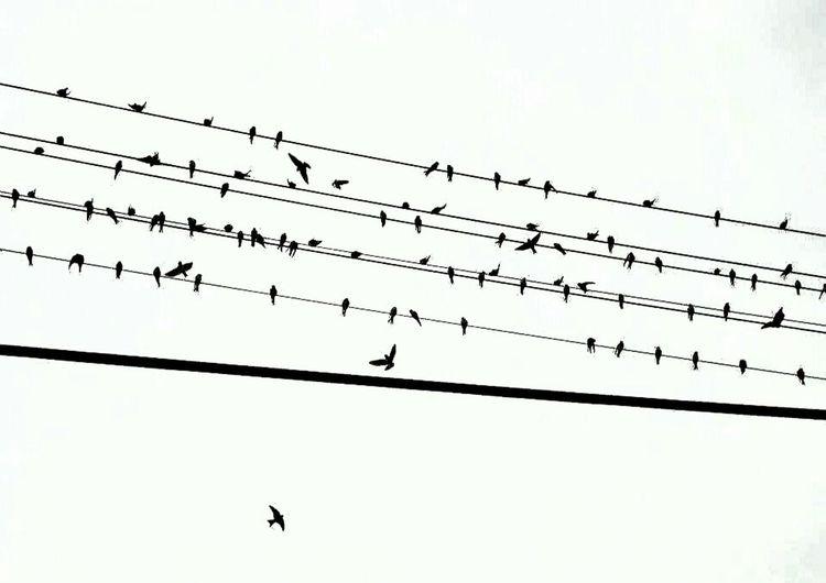 | birds' song | Hanging Out Taking Photos Check This Out Hello World Enjoying Life Birds Song Art ArtWork EyeEm Best Shots - Black + White Bnw Bnw_society EyeEm Best Shots Bnw_life Monochromatic Monochrome Monochromeart Bnw_switzerland Blackandwhite Eyem Best Edits EyeEm Nature Lover Photoofday Picoftheday Light And Shadow Pivotal Ideas