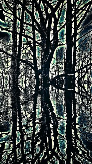 Old pic...enchanted forest? Reflection Tree Trunk Tree Hdr Snapseed The Magic Mission Get Inspired First Eyeem Photo Forest Dark Background Branch Abstract Creativity