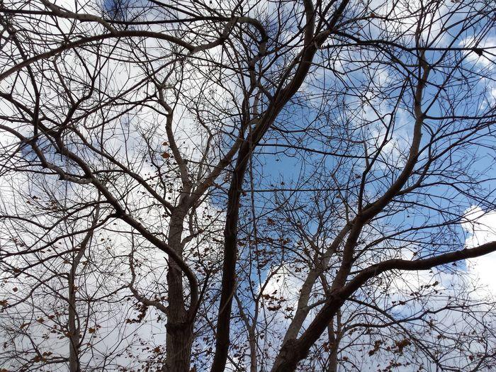 Nature Sky Tree Corpus Christi 2-19-17 80°