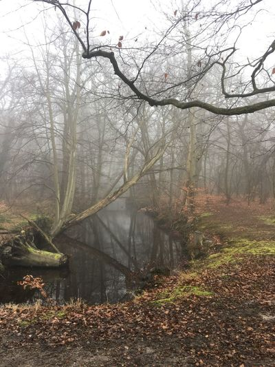 Fog Tree Beauty