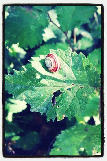 Snails Snail ❤