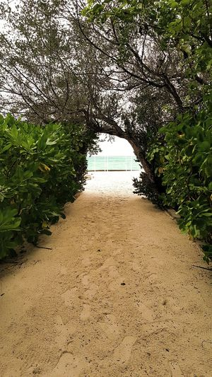 Walkway by trees