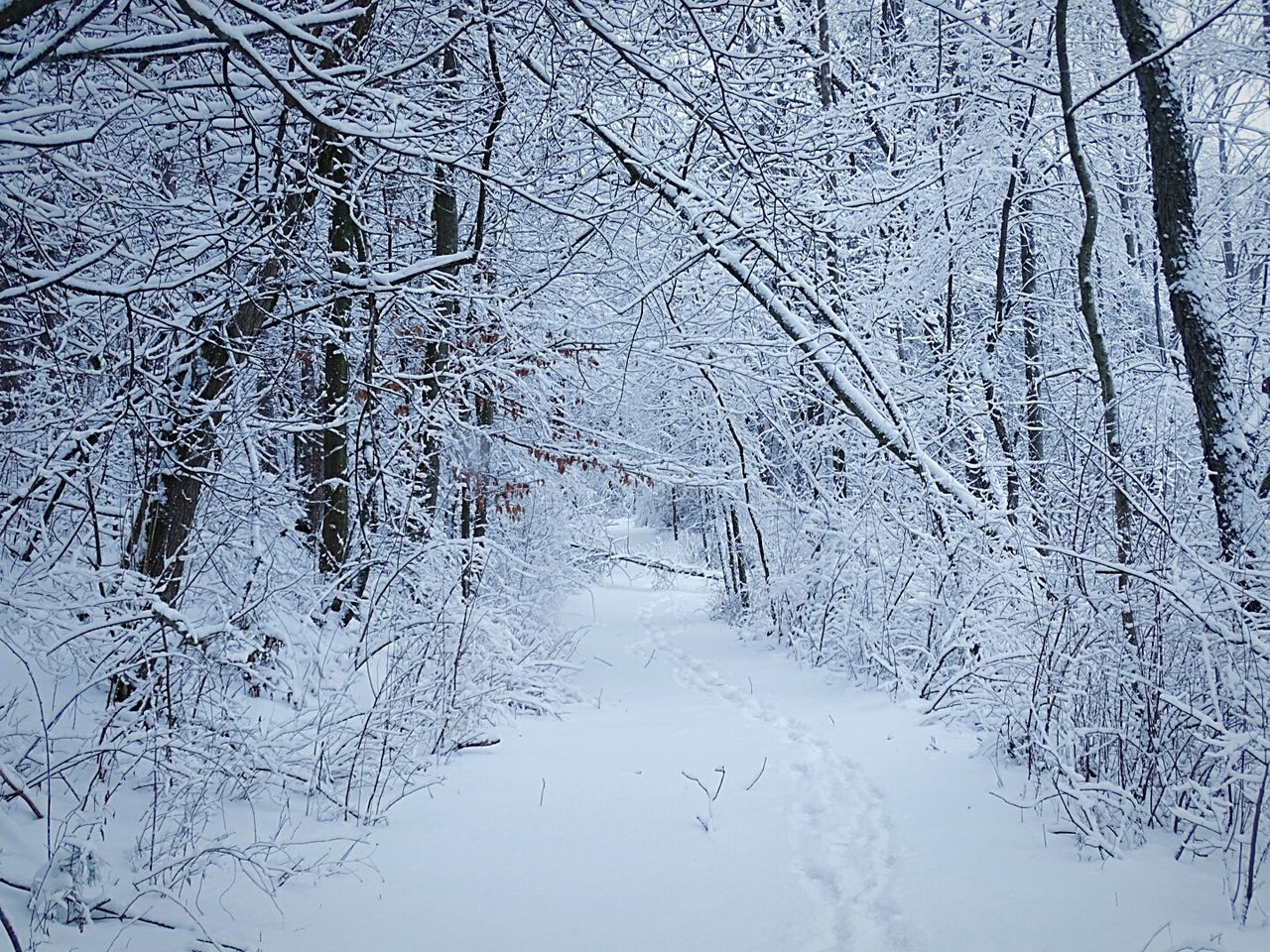 snow, cold temperature, winter, white color, nature, bare tree, snowing, tranquil scene, frozen, beauty in nature, tree, tranquility, remote, weather, polar climate, no people, branch, frost, landscape, backgrounds, scenics, forest, freshness, day, blue, beauty, spruce tree, snowdrift, outdoors, snowflake, sky