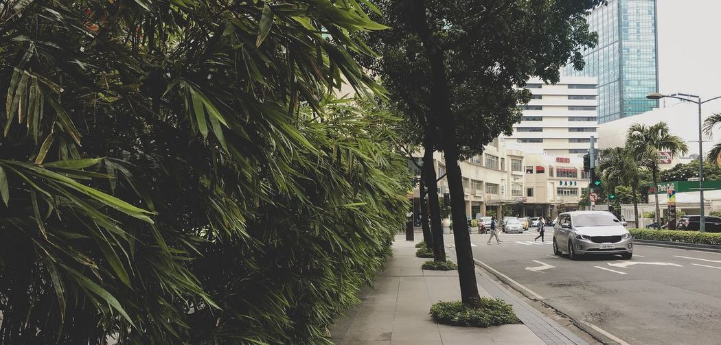 Street amidst trees in city