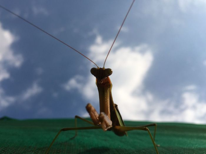 Close-up of grasshopper on field against sky